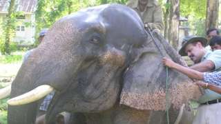 Dr Kushal Kunwar Sharma with an elephant
