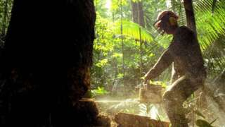 Lumberjack cutting tree with a chainsaw in the Amazon