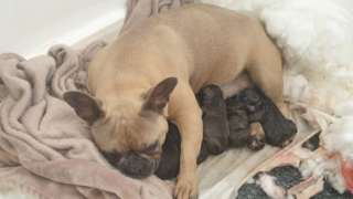 Dog and her puppies