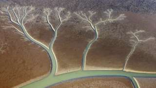 'Trees of life' in mudflats
