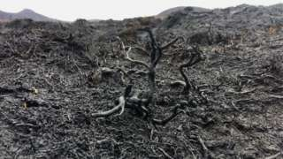 Damage to ground following a wildfire