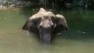 elephant dead in kerala