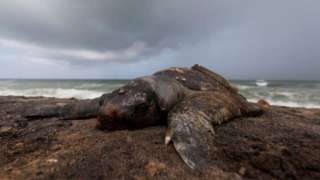 Dead fish and turtles have washed up in Negombo