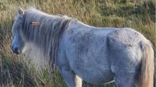 The wild pony with the cross bow in it
