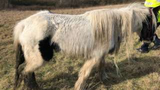 Horse abandoned in Kirkby-in-Ashfield