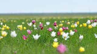 哈萨克斯坦大草原