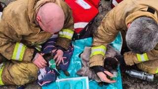 Cat rescue in Runcorn