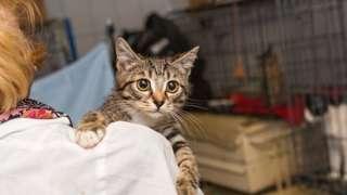 Gato aparece no colo de mulher, ambos em uma sala fechada e com cercados