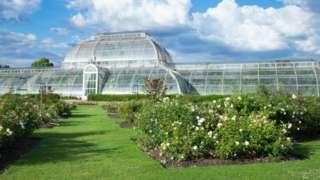 邱园中著名的地标建筑物,维多利亚时代建造的玻璃暖房——温带植物温室(Temperate House),里面容纳了1万株植物。