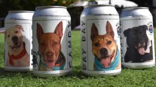 Photo of beer cans with dog photos on it