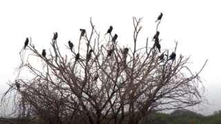 கரைவெட்டி பறவைகள் சரணாலயம்