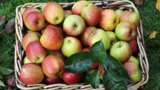 Яблоки в плетеной корзине.