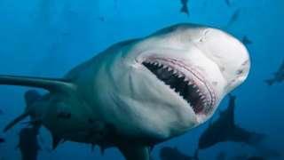 လေ့ကျင့်ရတဲ့ ရေပြင်မှာ ဒီလိုငါးမန်းတွေရှိ