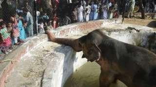 सबसे अकेला हाथी