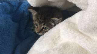 Kitten after being rescued
