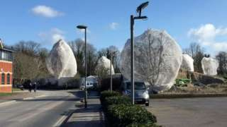 Netted trees in Guildford