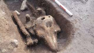 Porpoise remains discovered in a what appears to be a cut out grave