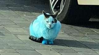A blue cat