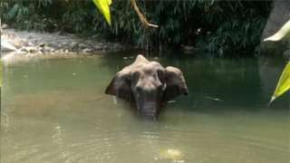 केरळ हत्ती