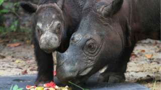 Ratu and her calf, Delilah, at a sanctuary in Indonesia. File photo