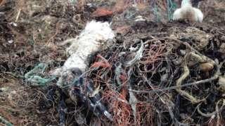 A dead gannet
