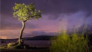 The Milarrochy oak on Loch Lomond