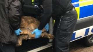 Tortoise being put in police van