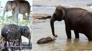 Elephant trafficking