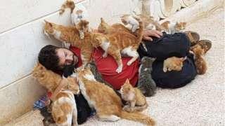 коти у сирії