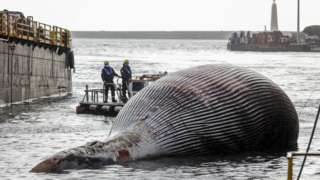 Image shows Italian coastguards removing the specimen of the whale