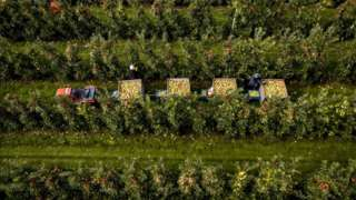 hollanda elma bahçesi