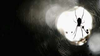 A spider sits in its web