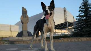 A stray dog stands at a monument outside the new, giant enclosure that covers devastated reactor number four at the Chernobyl nuclear power plant on August 18, 2017 near Chornobyl, Ukraine.