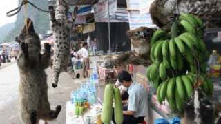 Việt Nam được biết đến đến là nơi tiêu thụ và trung chuyển trái phép các sản phẩm động vật hoang dã
