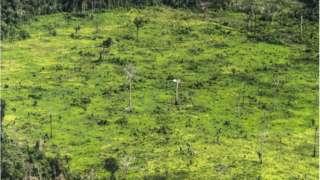 desmatamento na terra indígena Ituna Itatá