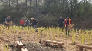 Witney's Tiny Forest at the end of planting day, March 2020