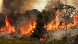 वनमा लागेको भीषण आगो
