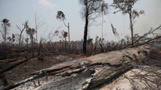 Charred trunks are seen on a tract of Amazon jungle, that was recently burned by loggers and farmers, in Porto Velho, Brazil August 23, 2019