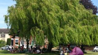 Ruddington Willow tree