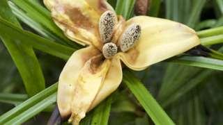 Bunga dari spesies pemanjat hutan