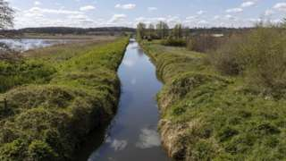 RSPB Ham Wall Nature Reserve, Somerset, May 2020