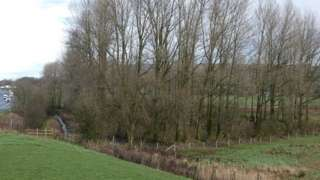 Burton Wood