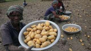 बांग्लादेशका आलु किसान