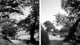Bradgate Park in 1869 and Bradgate Park in in 2020