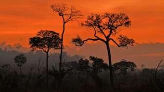 fires rainforest