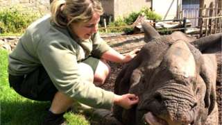 Phoebe with Bertus the rhino