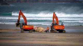 Excavators and whale