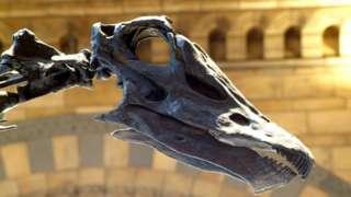 dinosaur skeleton head