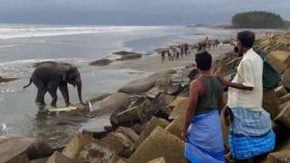 Villagers gather at a beach to watch a wild Asian elephant, believed to have entered Bangladesh from Myanmar by wading a river, near Bangladesh's southern coastal town of Teknaf. June 29, 2021