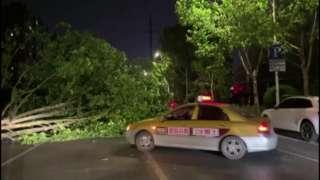 Fallen tree by police car in Nantong